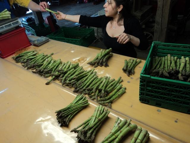 die fertigen Grünspargelbunde der Arbeiterin werden danach auf 500 g pro Bund gewogen
